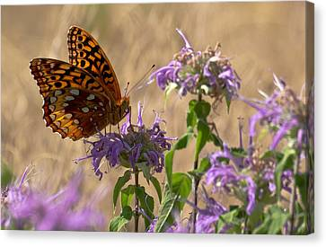 Great Spangled On Bee Balm Canvas Print by Shelly Gunderson