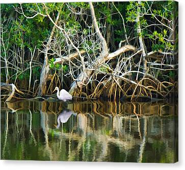 Great White Egret And Reflection In Swamp Mangroves Canvas Print