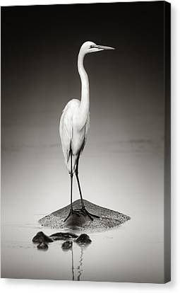 Sepia Tone Canvas Print - Great White Egret On Hippo by Johan Swanepoel