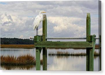 Great White Egret On The Marsh Canvas Print by Paulette Thomas