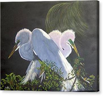 Great White Egrets Canvas Print