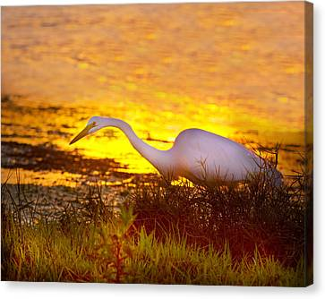Great White Sunset Canvas Print