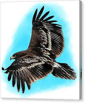 Greater Spotted Eagle Canvas Print by Roger Hall