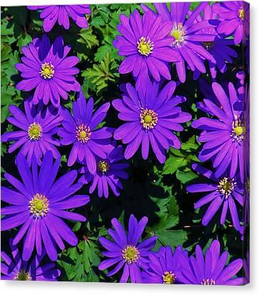 Grecian Wildflowers 2 Canvas Print by John Wartman