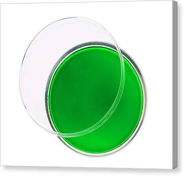 Laboratory Equipment Canvas Print - Green Agar Plate by Natural History Museum, London