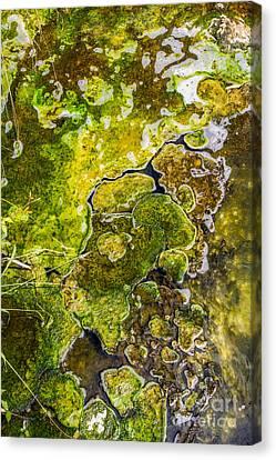 Green Algae Canvas Print by Patricia Hofmeester