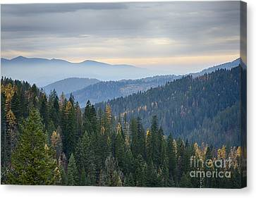 Green And Gold Forest Canvas Print