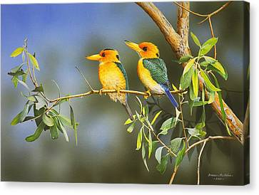 Green And Gold - Yellow-billed Kingfishers Canvas Print by Frances McMahon