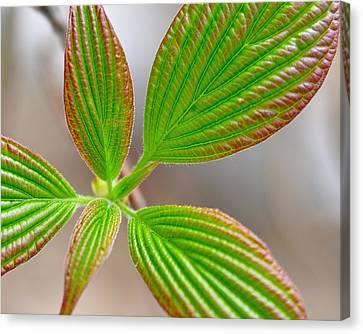 Green And Red Leaves Canvas Print by Todd Soderstrom