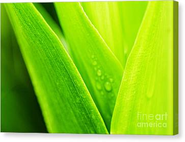 Simple Beauty In Colors Canvas Print - Green And Wet by Thomas R Fletcher
