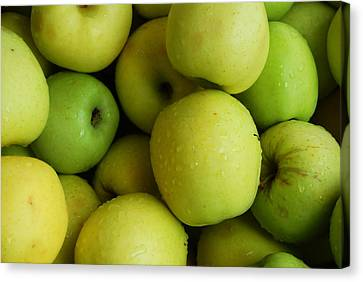 Green Apples Canvas Print by Mamie Gunning