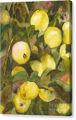 Green Apples Canvas Print by Sandy Linden