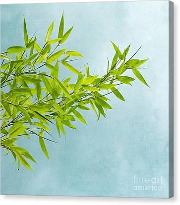 Green Bamboo Canvas Print by Priska Wettstein