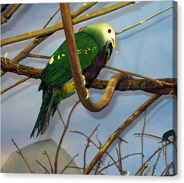 Green Bird Canvas Print by Larry Stolle
