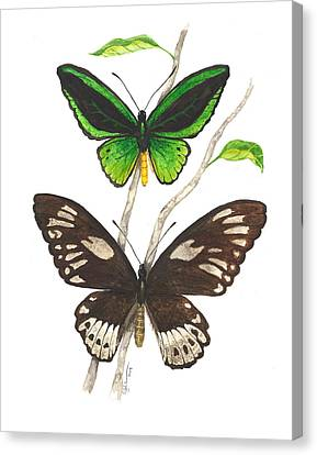 Green Birdwing Butterfly Canvas Print