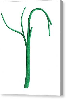 Green Branche Canvas Print