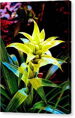 Green Bromeliad Canvas Print by Sandra Pena de Ortiz