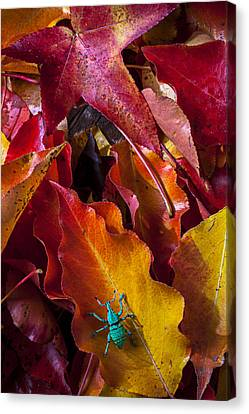 Green Bug Canvas Print by Garry Gay