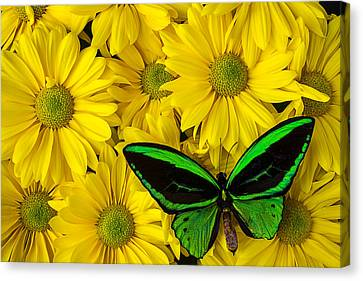 Green Butterfly Resting Canvas Print by Garry Gay
