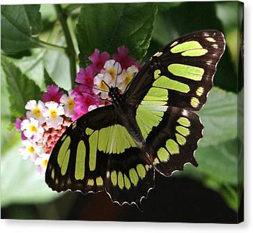 Green Butterfly With Flowers Canvas Print