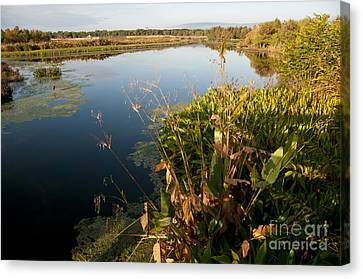 Green Cay Wetlands, Fl Canvas Print