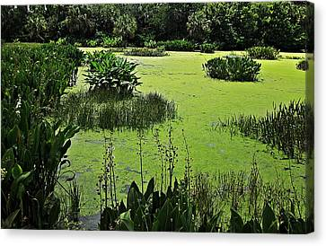 Green Cay Wetlands Canvas Print by MTBobbins Photography