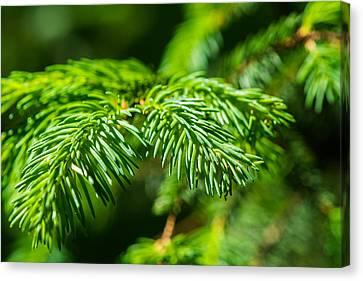 Green Christmas Tree 2 Canvas Print by Alexander Senin