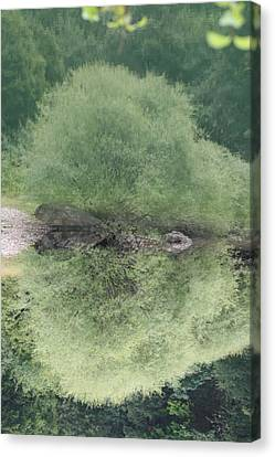 Green Clam Reflection Canvas Print