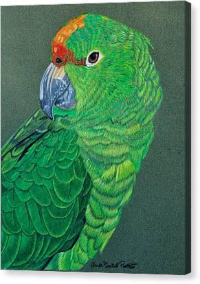 Green Conure Canvas Print