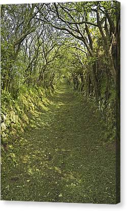 Green Country Lane Canvas Print by Jane McIlroy