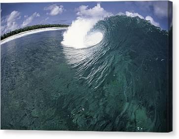 Green Curl Canvas Print by Sean Davey