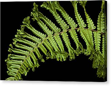 Canvas Print featuring the photograph Green Curve by Trevor Chriss