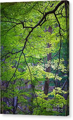 Green Explosion Canvas Print by Inge Johnsson