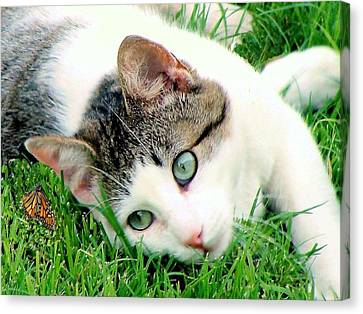 Canvas Print featuring the photograph Green Eyed Cat by Janette Boyd