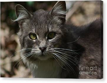 Green Eyed Kitty Cat Canvas Print