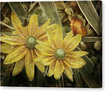 Canvas Print featuring the photograph Green Eyed Susie by Barbara Orenya