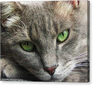 Canvas Print featuring the photograph Green Eyes by Leigh Anne Meeks