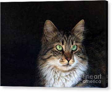 Green Eyes Canvas Print by Stelios Kleanthous