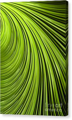 Green Flow Abstract Canvas Print