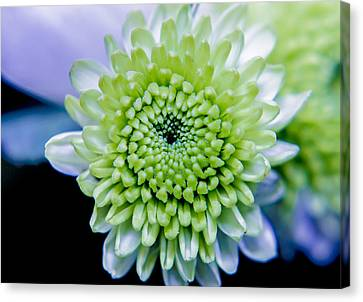 Green Flower Canvas Print by Amr Miqdadi