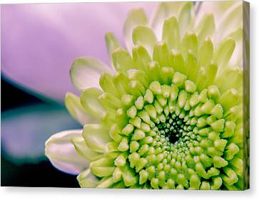 Green Flower2 Canvas Print by Amr Miqdadi