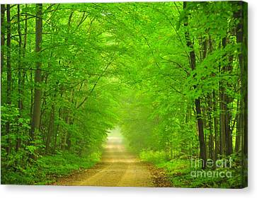 Green Forest Tunnel Canvas Print by Terri Gostola