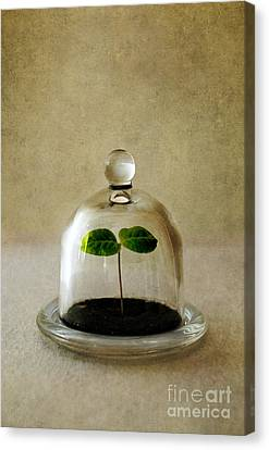 Green Fresh Plant Under The Glass Cover Canvas Print