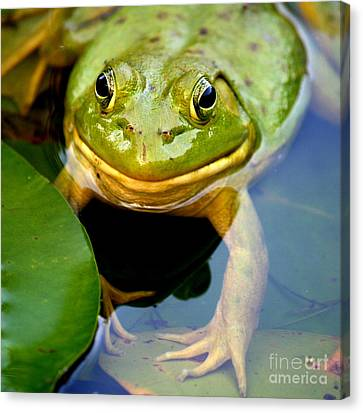 Green Frog At Trustom Pond  Canvas Print