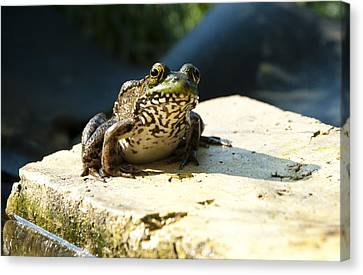 Green Frog - Lookin At Yah Canvas Print
