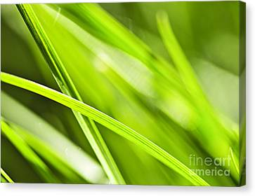 Water Drops Canvas Print - Green Grass Abstract by Elena Elisseeva
