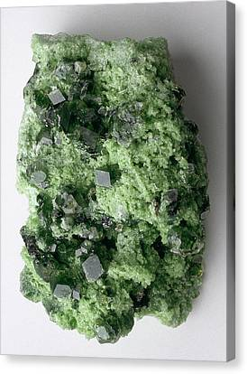 Green Grossular (garnet) In Matrix Canvas Print
