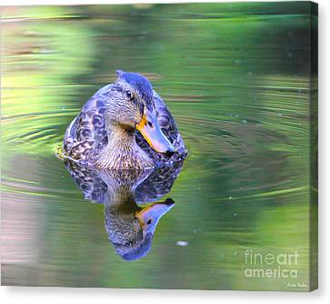 Green-headed Duck At Sunset Canvas Print
