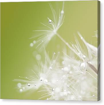 White Pearl Canvas Print - Green by Hilde Ghesquiere