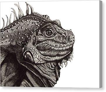 Green Iguana 2 Canvas Print by Tracey Gurr BA Hons